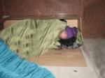 homelesspersonsleepingbag